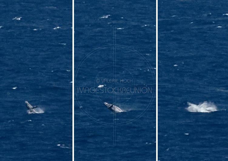 La saison des baleines © Valérie Koch - Tous droits réservés