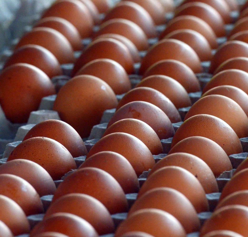 Salmonelles dans les œufs © Valérie Koch - Tous droits réservés